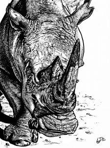 Rhino Jess